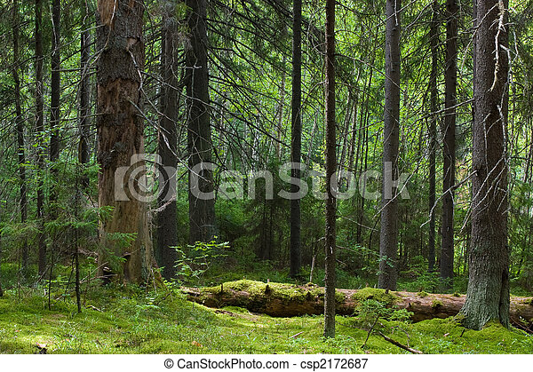 Mystery forest - csp2172687