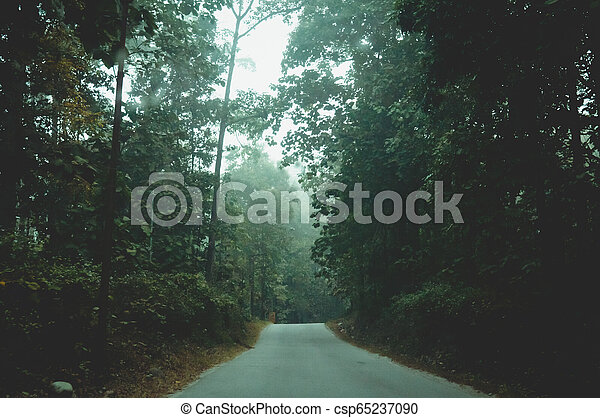 Mystic foggy forest road in first sunlight. Rural scenery of empty countryside dirt wet road leading through foggy forest of fall trees with lush foliage. Travel tourism and nature background concept. - csp65237090