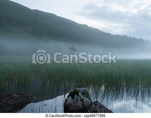 Mystical fog - csp48977999
