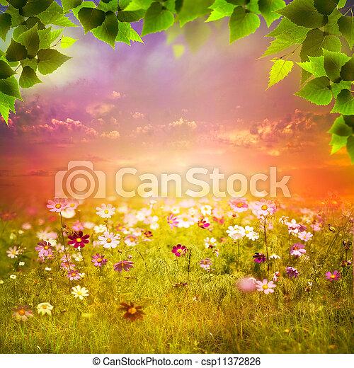 mystiek, meadow., avond, natuurlijke , abstract, achtergronden, ontwerp, jouw - csp11372826