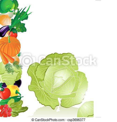 növényi, káposzta - csp3696377