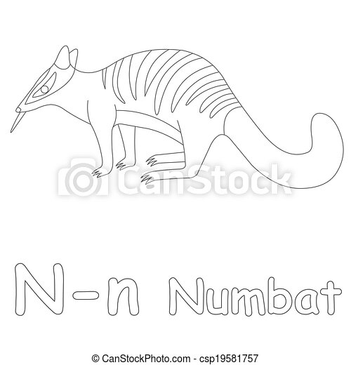 N For Numbat Coloring Page   Csp19581757