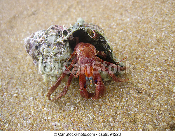 Caranguejo do buzio na areia - csp9594228