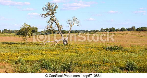 Nachusa Grasland - Illinois - csp6710864