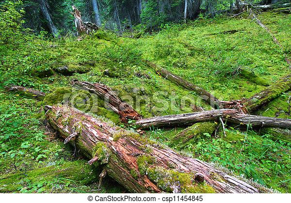 Planta forestal del parque nacional de Yoho - csp11454845