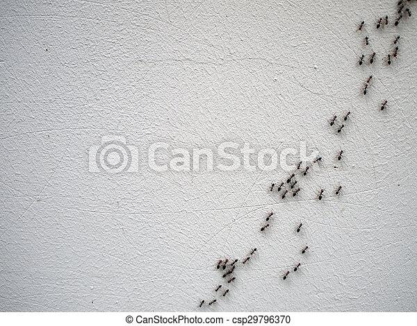 Nahaufnahme kette ameisen laufen kette wand bild bild suche foto clipart csp29796370 - Ameisen in der wand ...