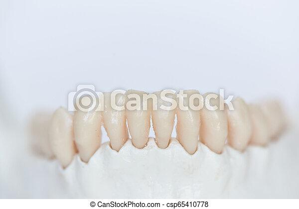 nahaufnahme, kiefer, menschliche zähne, knochen, ansicht - csp65410778