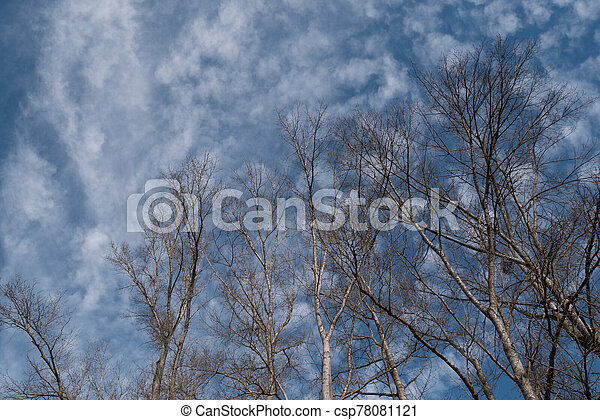 Naked branches against blue sky - csp78081121