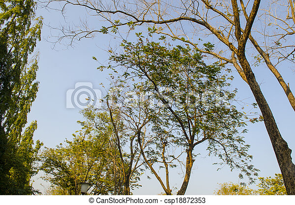 Naked branches of a tree against blue sky close up - csp18872353