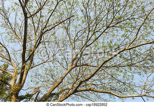 Naked branches of a tree against blue sky close up - csp18922852