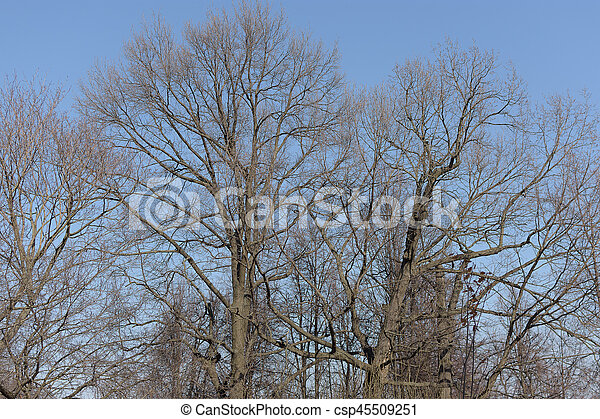 Naked branches of a tree against blue sky - csp45509251