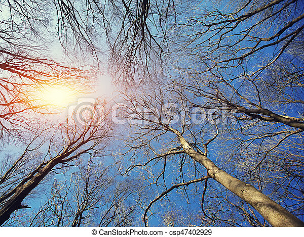 Naked branches of a tree against blue sky - csp47402929