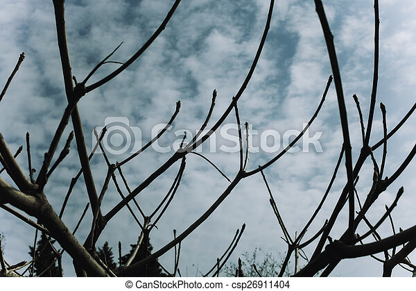 Naked branches of a tree against blue sky - csp26911404