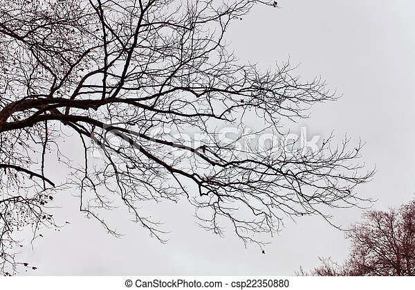 Naked branches of a tree against - csp22350880