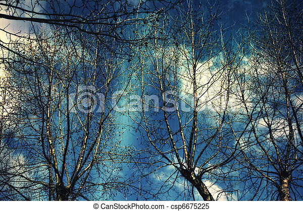 Naked branches of a tree against the dark blue sky - csp6675225