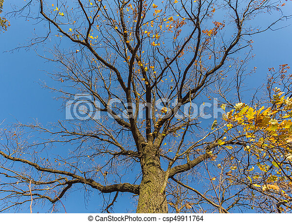 Naked branches of a tree - csp49911764