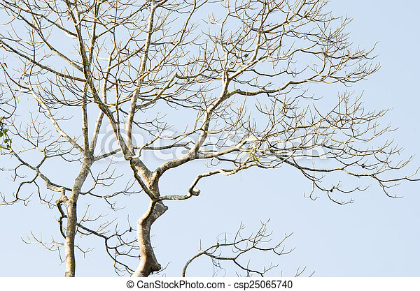 Naked branches of a tree - csp25065740