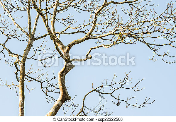 Naked branches of a tree - csp22322508