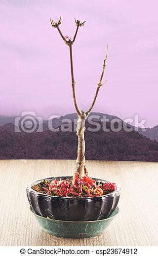 Naked tree - csp23674912