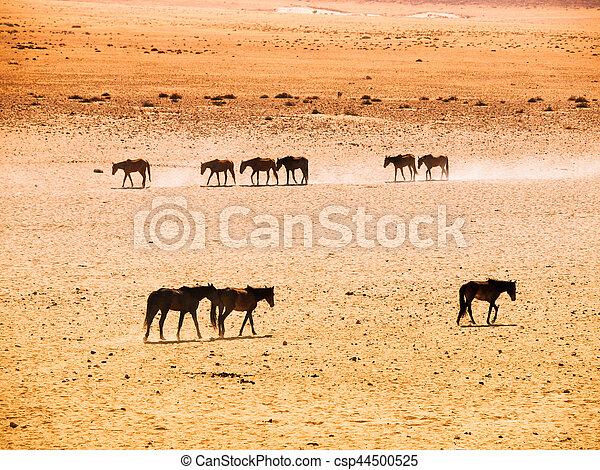 Öken afrika