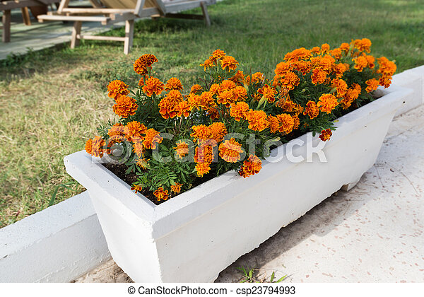 Naranja arriate flores maravilla jard n fotograf as de - Arriate jardin ...