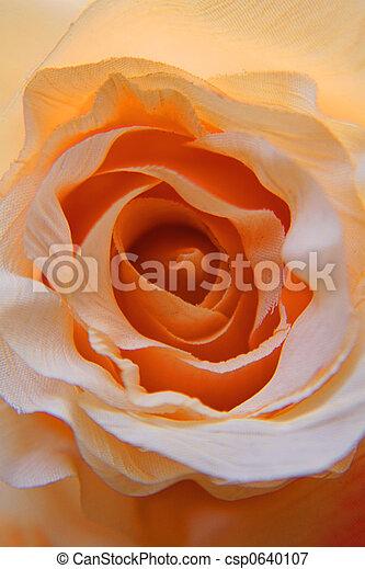 Rosa, naranja, flor - csp0640107