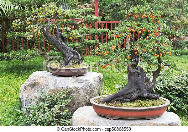Dos Bonsais Con Frutas Naranjas En Un Parque Chengdu China Canstock