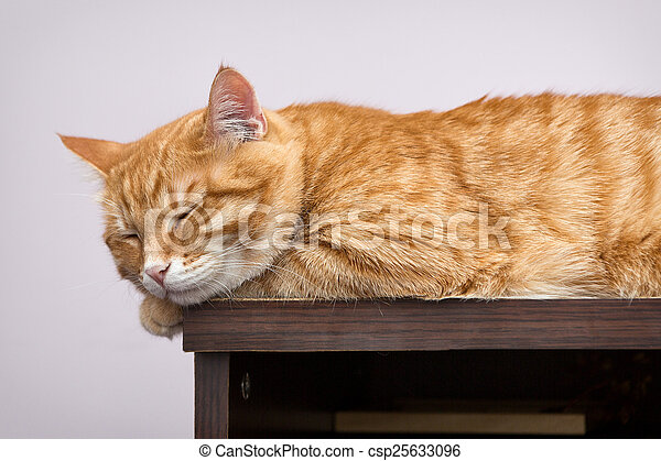 Gato naranja perezoso - csp25633096