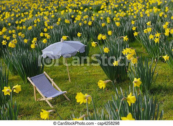 El prado de Daffodil - csp4258298
