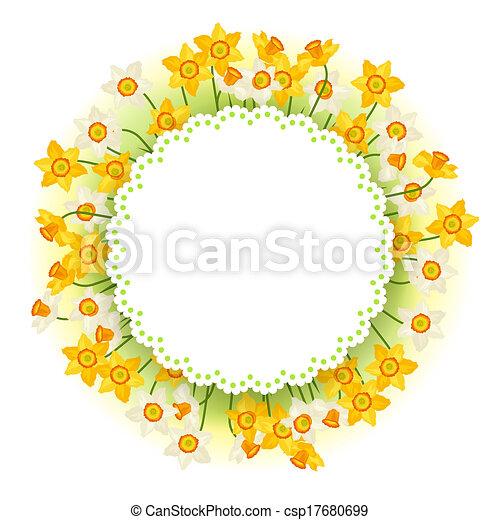 narcissus, flores mola, natural, experiência. - csp17680699