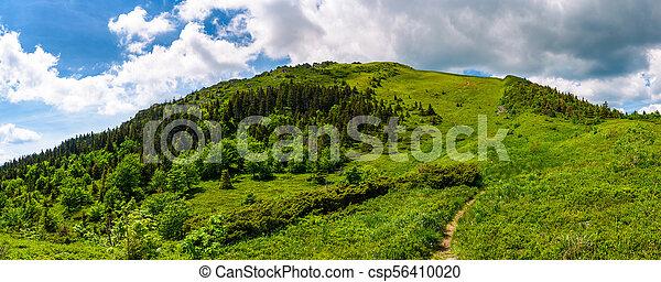 narrow path to the mountain top - csp56410020