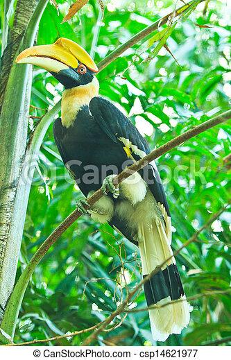 nashornvogel, groß - csp14621977