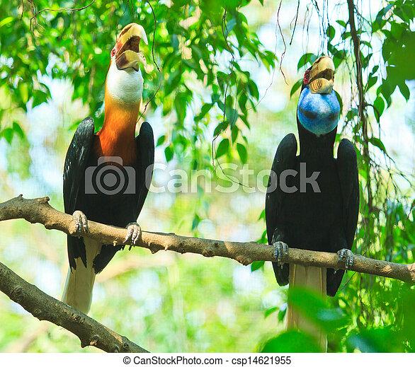 nashornvogel, groß - csp14621955