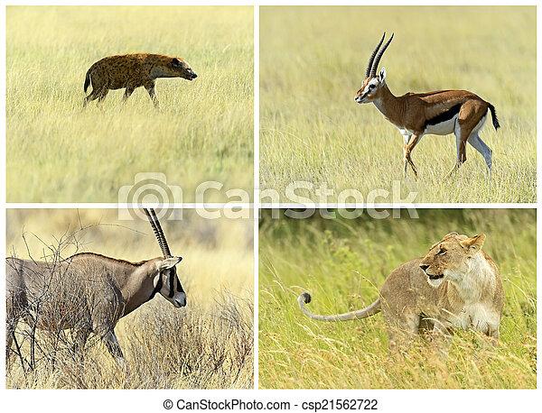natürlich, lebensraum, savanne, säugetiere, ihr, afrikanisch - csp21562722