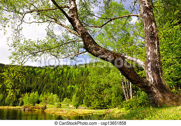 National Park Bavarian Forest  - csp13651858