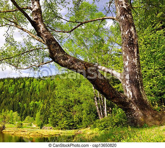National Park Bavarian Forest - csp13650820