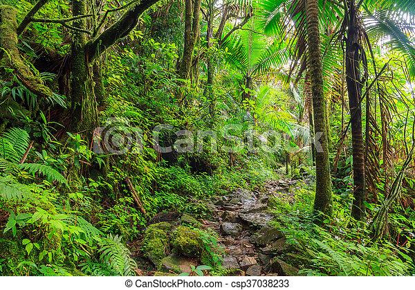 National park El Yunque - csp37038233