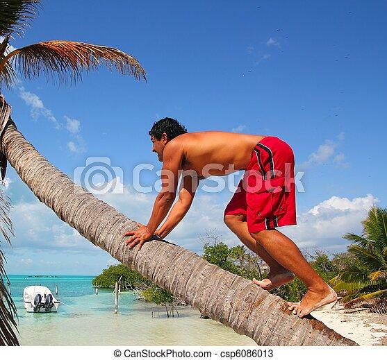 native latin indian climbing coconut palm tree trunk - csp6086013