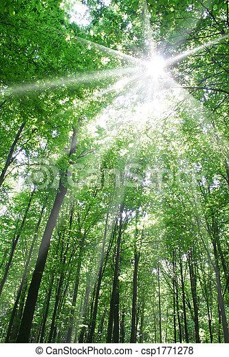 Natur - csp1771278