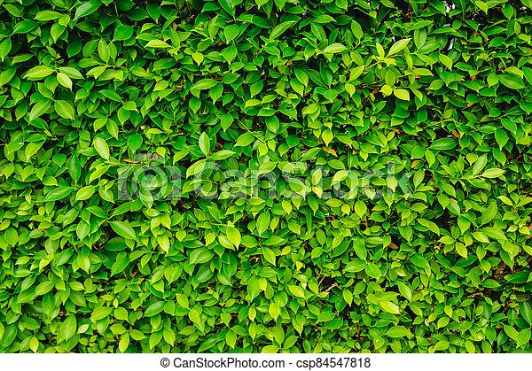 natur, blätter, grüner hintergrund - csp84547818