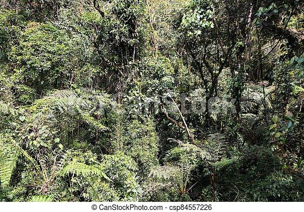natur, brasilien - csp84557226