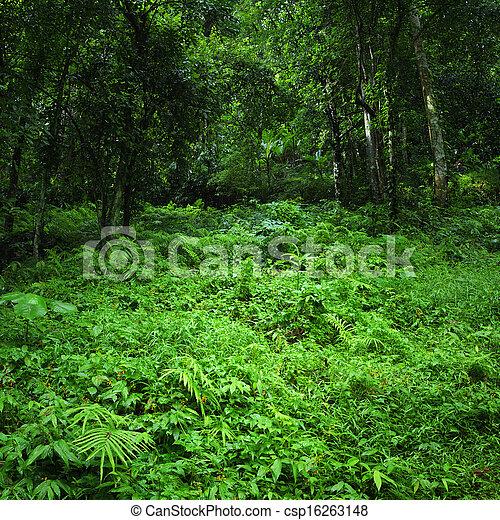 natur, tropische , hintergrund., grüner wald, wild, landschaftsbild, dschungel - csp16263148