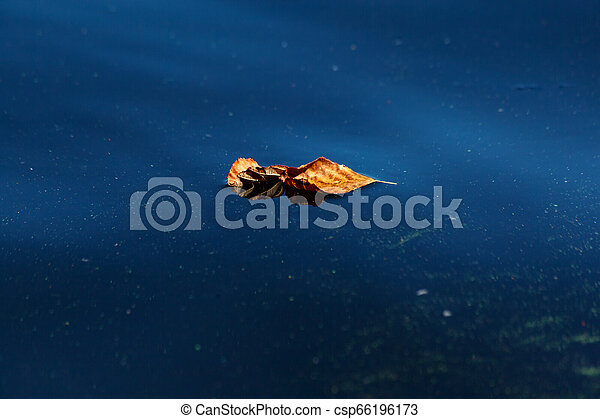 Natural abstract background. Yellow dry leaf lying on the blue surface of the water close-up - csp66196173