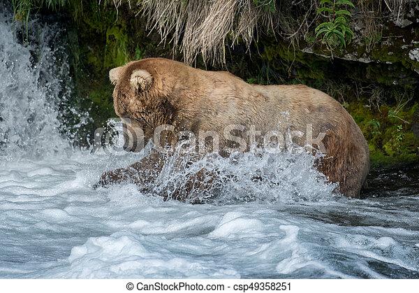 Pesca de osos marrones de Alaska - csp49358251