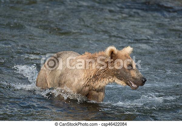 Pesca de osos marrones de Alaska - csp46422084