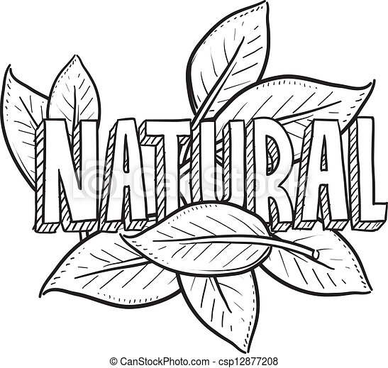 Natural food sketch - csp12877208