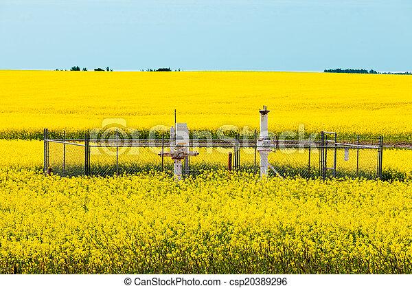 Natural gas wellheads canola agricultural farmland - csp20389296