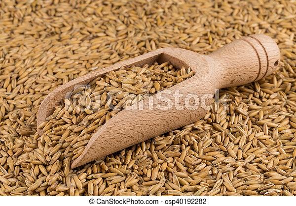 natural oat grains background, closeup - csp40192282