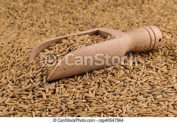natural oat grains background, closeup - csp40547564