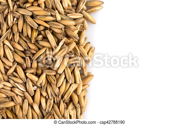 natural oat grains background, closeup - csp42788190